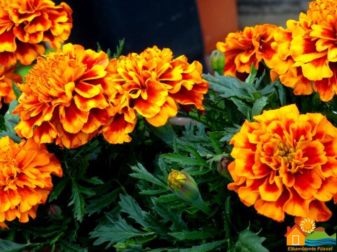 Außenansicht: Blumen